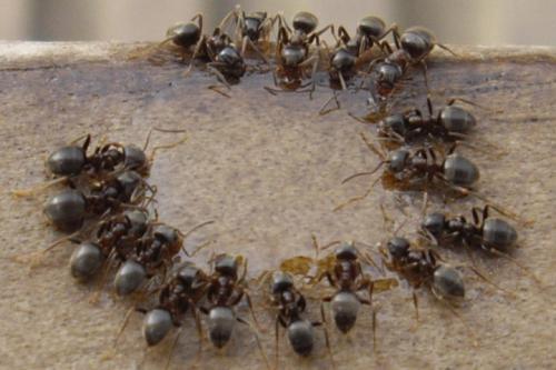 ants-500x333